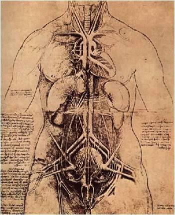Estudo de anatomia de Leonardo da Vinci